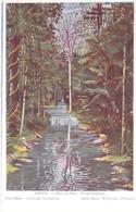 BRASIL Brazil Brésil - PARA : Flore Tropicale / Tropical Vegetation - CPA Colorisée  / Tree Arbre Bome Boom Albero árbol - Brésil