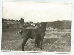 A Man Holds A Horse Hb984-134 - Personnes Anonymes
