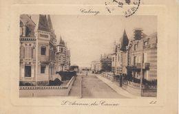 Cp , 14 , CABOURG , L'Avenue Du Casino - Cabourg