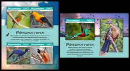 MOZAMBIQUE 2019 - Rare Birds. M/S + S/S. Official Issue - Oiseaux