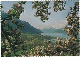 Ullensvang  - (Norge - Norway) - Noorwegen