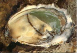 N°70177 -cpsm Une Belle Huître Verte De Marennes Oléron- - Poissons Et Crustacés