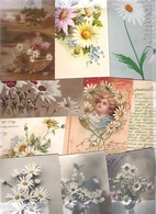 Lot De 10 Cartes Avec Des Marguerittes Dont Illustrateur Période  Art Nouveau à Art Déco 1900/1930 - Cartes Postales