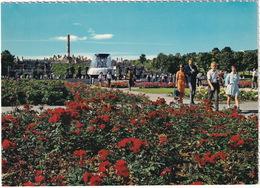 Oslo. Vigelandsanlegget - Rosebedene - Bloom Of Roses - The Vigeland Sculpture Park - (Norge - Norway) - Noorwegen