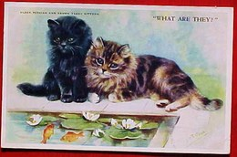 Cpa Illustrateur M. GEAR CHATS CHATONS  POISSONS ROUGES , Chat Persan,1953  Kitten , BLACK PERSIAN CAT, BROWN TABBY A/s - Chats