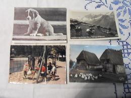 LOT 34 CPM THEME ANIMAUX Tous Les Scans Disponibles - Cartes Postales