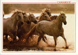 CHEVAUX DE CAMARGUE  Horses  Cavalli - Chevaux