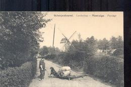 Scherpenheuvel - Hondskar - Molen - 1920 - Scherpenheuvel-Zichem