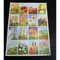 Planche Arnaud N° 66 : Fleurs Des Champs : Paquerette, Muguet, Orchis, Anémone .... - Posters