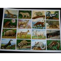 Planche Arnaud N° 21 : Animaux Sauvages : Rongeurs, Carnivores, Ruminants, Insectivores - Posters