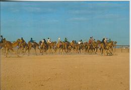 Dubai V. 1978  Camel Race  (55304) - Dubai