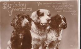 AO59 Animal Postcard - Dogs On A Birthday Greeting - RPPC - Dogs