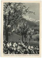 RODELS Landwirtschaft Bauernverein Domleschg Obst-Bau Edelobst - GR Grisons