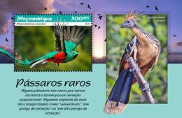 Mozambique. 2019 Rare Birds. (0109b) OFFICIAL ISSUE - Oiseaux
