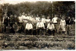 Carte Photo. Groupe Posant Lors De La Récolte De Pommes De Terre - Cultures