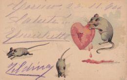 1889-Ratti Che Si Cibano Di Un Cuore Ferito, Cartolina Viaggiata - Animaux & Faune