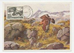 Maximum Card Austria 1953 Bird Of Prey - Eagle - Oiseaux