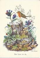 (11V) - Oiseaux