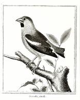 Gutenberg Museum (13V) - Oiseaux