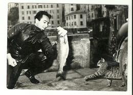 """2663 """" SOGNO A PORTATA DI ZAMPA - SGUARDO FELINO VERSO L'AMBITA PREDA """" FOTO ORIGINALE - Foto"""
