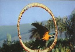 Tenerife Loro Parque / Ara Macaw - Oiseaux