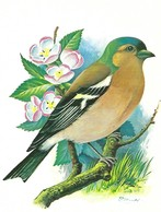 Pinson Ordinaire (14V) - Oiseaux