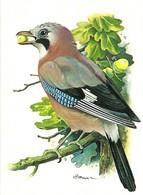 Garrulus Glandarius (16V) - Oiseaux