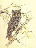 Owl, Hibou, Eule, Uil (Bob Genton) (19V) - Oiseaux