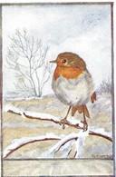 Erithacus Rubecula (21V) - Oiseaux