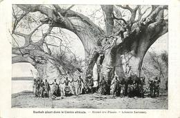 BAOBAB GEANT DANS LE CENTRE AFRICAIN LIBRAIRIE LAROUSSE - Bomen