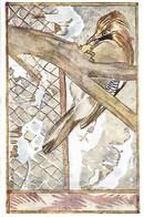 Garrulus Glandarius (22V) - Oiseaux