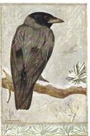 Corvus Cornix (23V) - Oiseaux
