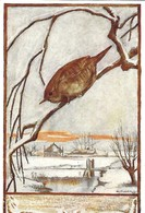 Troglodytes Troglodytes (24V) - Oiseaux