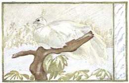 Pavo Cristatus Muticus (26V) - Oiseaux