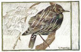Sturnus Vulgaris (27V) - Oiseaux