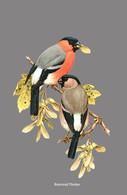 CARTE THÈME OISEAUX BOUVREUIL PIVOINE - Oiseaux