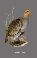 CARTE THÈME OISEAUX PERDRIX GRISE - Oiseaux