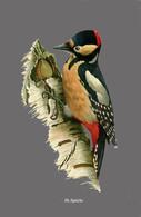 CARTE THÈME OISEAUX PIC ÉPEICHE - Oiseaux