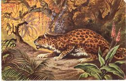 POSTAL    SERIE FAUNA Nº 8 - Tigres