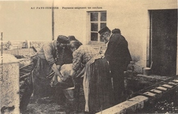 Au Pays Comtois - Paysans Saignant Un Cochon - Cecodi N'1008 - Francia