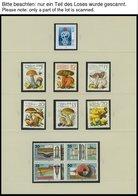 SAMMLUNGEN **, Komplette Postfrische Teilsammlung DDR Von 1979-81 Im SAFE Falzlosalbum, Prachterhaltung - Deutschland