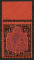 BERMUDA-INSELN 116c **, 1951, 1 £ Schwarz/violett Auf Scharlach, Gezähnt 13 (SG 121d), Postfrisch, Pracht - Bermuda