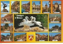 (A) Promenade En Alsace , Pays Des Cigognes - France
