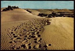 Dunas De Maspalomas  - Cran Canaria  -   Ansichtskarte Ca. 1979    (9759) - Gran Canaria