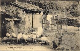 Notre Auvergne - 32- Petit Déjeuner En Famille -ed. M.C. - Cochons