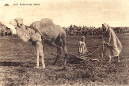 1013- Labourage  Arabe -ed. C A D  ( Avec Un Dromadaire ) - Attelages
