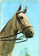 HORSE  Cavallo Grigio Con Finimenti - Cavalli
