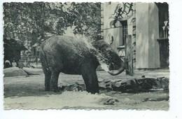 Anvers Antwerpen Zoo Eléphant D'Inde - Antwerpen
