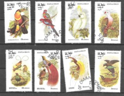 Oman Oiseaux O - Oman