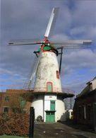 RUISELEDE (W.-Vl.) - Molen/moulin - Prachtige Opname Van De Knokmolen Met Verdekkerde Wieken (close-up) - Ruiselede